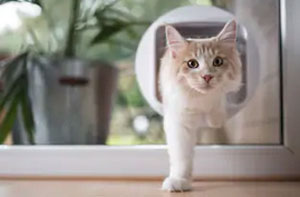 Cat Flap Fitter Northampton Northamptonshire (NN1)