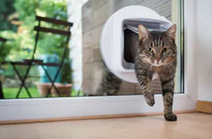 Cat Flap Fitter Fenton