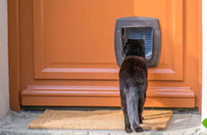 Cat Flap Installers Liverpool (L1)