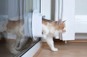 Cat Flap Installers Dukinfield (SK16)