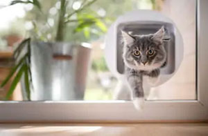 Cat Flap Fitter Dukinfield Greater Manchester (SK16)